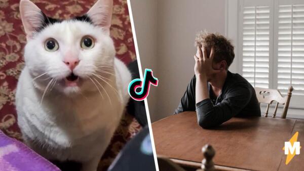 В Сети мему с толстым котом нашли новое применение. Пушистик стал олицетворением беспомощности