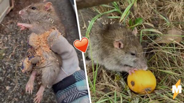 Фермерша спасла крыску