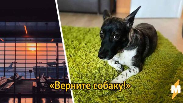 Верите Еву. Клиенты S7 Airlines критикуют авиалинии после инцидента с собакой в аэропорту Домодедово