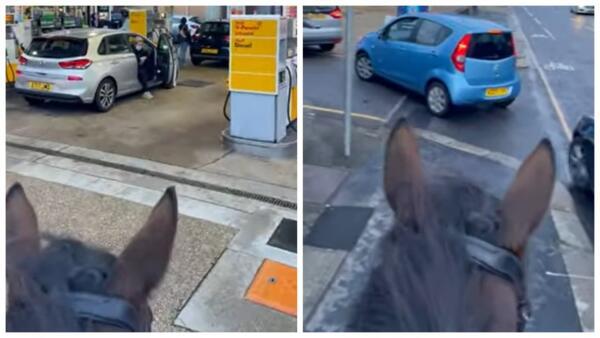Всадник на лошади троллит водителей в пробке у заправки. Когда не нужно топливо, а только морковь
