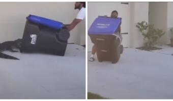 Вышел в тапках во двор и победил аллигатора. Ветеран ловко упаковал хищника в мусорный бак на видео