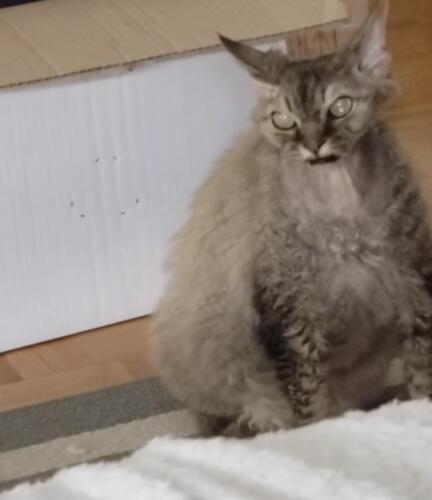 Кот, который сбежал из ваших кошмаров. В Сети смеются над демоническим домашним питомцем