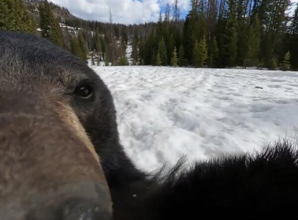 Медведь нашел камеру в лесу и снял самый необычный влог о жизни в дикой природе
