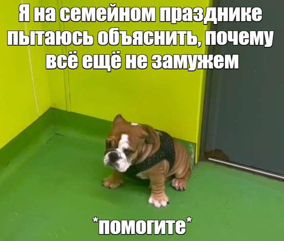 Стеснительный щенок