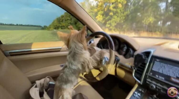 Ради лайков и просмотров блогер позволил собаке управлять своей жизнью