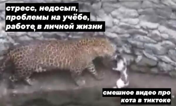 Леопард VS кошка в яме