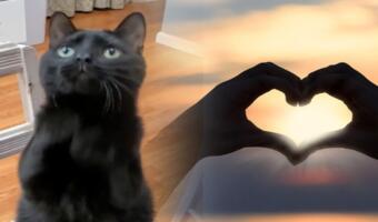 Кот-хитрюга умоляет дать лакомство как человек и герой «Шрека». Такому взгляду не скажешь «Нет»