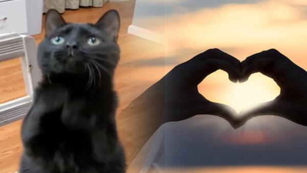 """Киса со взглядом кота из """"Шрека"""" заворожил людей в Сети. Он умоляет отдать ему сердечко - и работает"""