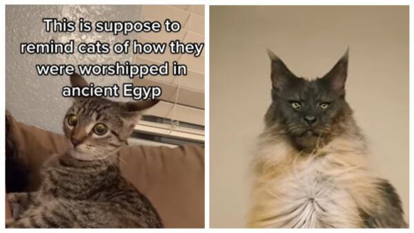 Не кот, а бог. Хозяева включают музыку, чтобы напомнить своим кошкам, как их почитали в древнем Египте
