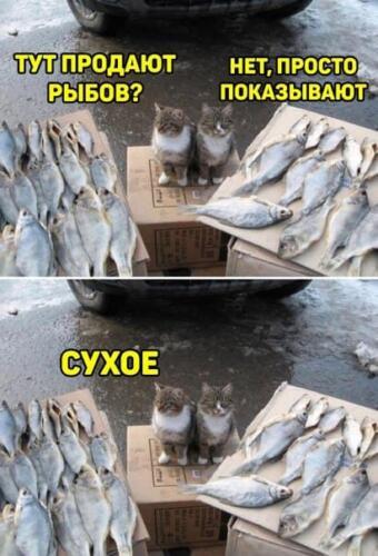 Помните котов, покупавших рыбов? Теперь они их продают в новых версиях популярного мемов