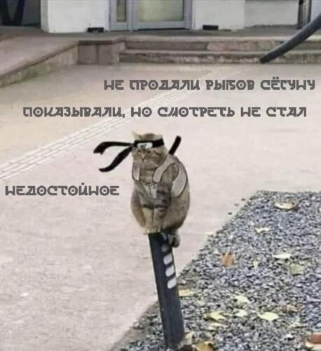 Коты теперь продают рыбов