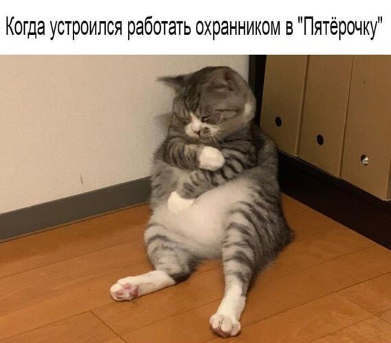 Кот трогательно уснул у стены, а пикчеры увидели в нём жизненный мем про усталость и философию