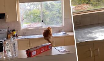 Коты против гравитации. Как лайфхак с фольгой запускает пушистых в небо