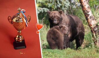Толстые медведи на Аляске выглядят как бочки с мёдом. Конкурс на самого тучного косолапого в разгаре