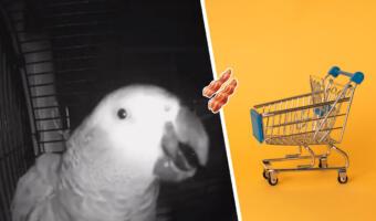 Попугай Макс покупает через умную колонку мясо, включает рэп и хрипло хохочет, пока хозяева не видят