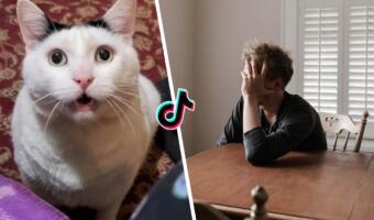 Девушки с помощью мема с толстым и грустным котом Бендером высмеивают бытовую беспомощность парней