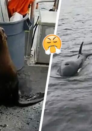 Женщина выгнала морского котика с лодки прямо к голодным косаткам и стала антигероиней в Сети