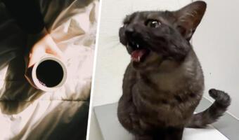 Кот учёный выглядит так. Умная питомица говорит на человеческом языке, желая доброго утра