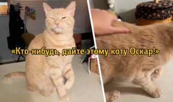 Не драма-квин, а драма-кот. Хитрый питомец ловко развёл хозяйку на ласку, притворившись хромым