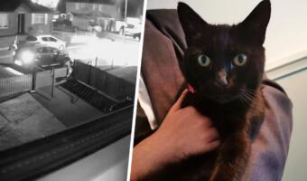 Кошка прошла огонь, воду и кремацию. Семья проводила питомицу в мир иной, а та вернулась живой