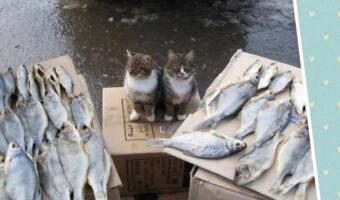 Мем с котами «Вы продоёте рыбов? Нет просто показываю» обрёл продолжение и подарил хвостатым желаемое