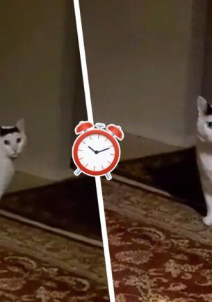 Мяукающий толстый кот угодил в мем-тренд о слежке. Теперь питомец не кивает головой, а подглядывает