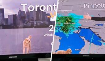 По прогнозу сегодня — собака. Растерянный пёс ворвался в эфир невозмутимого метеоролога и рассмешил людей