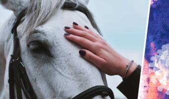Вакцина от ковида vs лошадиное глистогонное. Люди делают выбор в пользу второго в абсурдном тренде