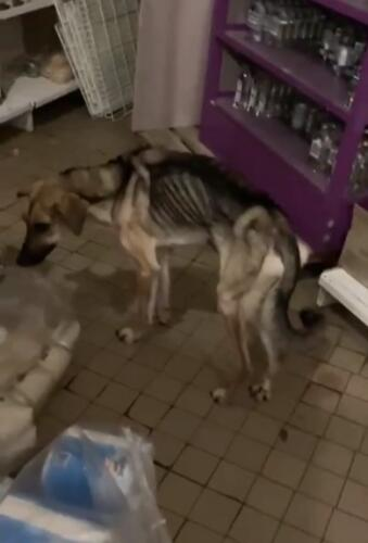 Что известно о собаке из Тутаева, которую спасли прохожие