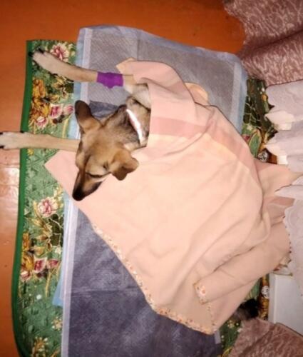 Это остаток собаки, живой скелет. Что известно о животном, которого спасли с балкона в Тутаеве