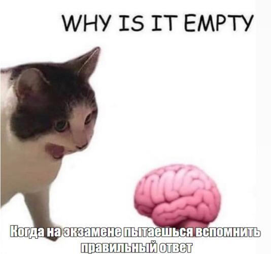 Почему она пустая? Кот возмущённо орёт на миску с кормом, и это мем, ставший шутками про мозг