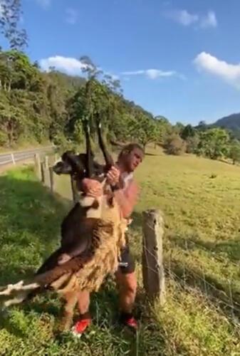 Мужчина героически спас застрявшую в заборе овцу, став мечтой
