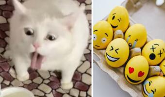 Белый кот показал, что такое истинное отвращение, и стал мемом о ситуациях, которые хочется забыть