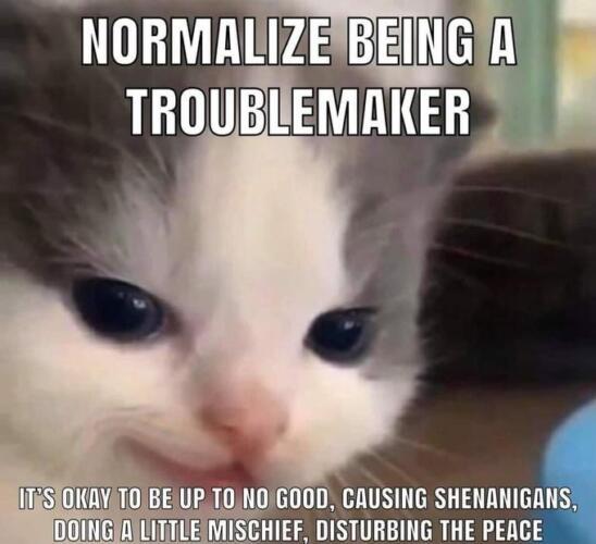 Смотрящий в камеру котёнок теперь символ коварства. Призывает быть злым с хитрой улыбочкой