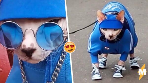 Кот-гопник ходит в костюме Adidas подобно криминальному авторитету