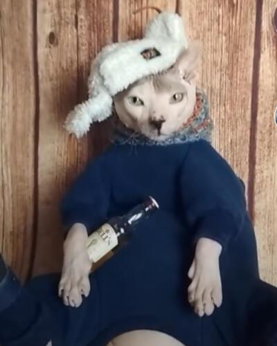 Кот ходит в костюме Adidas подобно криминальному авторитету. Когда ты олицетворение гоп-культуры