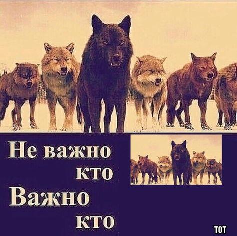 """Что за мем, где волки качаются на турниках под трек """"Доля воровская"""". Дерзкие цитаты альфачей снова в тренде"""