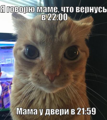 Кот, смотрящий в душу, очаровал любителей пикч. Готовый мем о слежке и недовольстве
