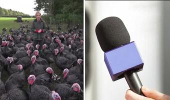 Коварный индюк клюнул журналистку и повеселил сородичей. Птицы громким гоготом обсмеяли испуг девушки
