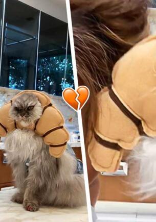 В инстаграме Кейт Бекинсейл воцарился кот. На фото он властный хозяин, недовольный покорной рабыней