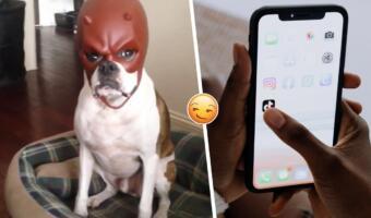 Суровая собака в шлеме Сорвиголовы так грозно глядела с экрана, что возродилась в меме о пафосе