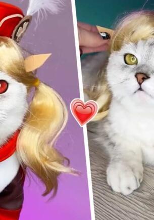 Россиянка сделала свою кошку звездой тиктока, переодевая её в героев Genshin Impact и «Наруто»
