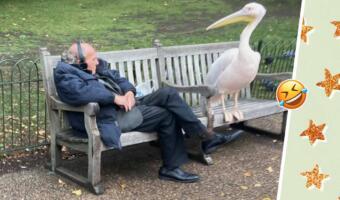 Огромный пеликан устроился на лавке, напугав старика. Птичья версия мема «Привет, я подсяду?»