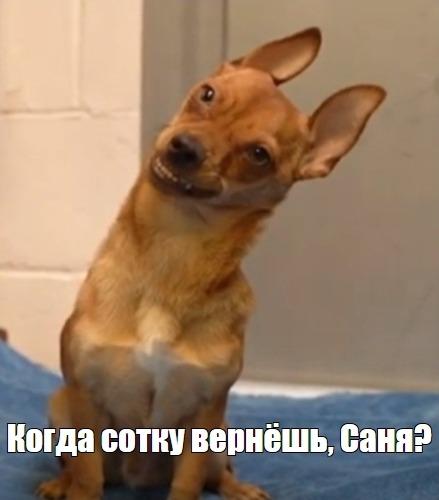 Пёс Джаспер из приюта ухмыляется на видео. Лучший друг человека с дьявольски милой улыбкой