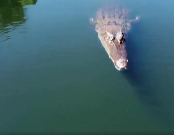 Крокодил подпрыгнул и сцапал дрон журналистов, а камера гаджета показала запись после атаки хищника