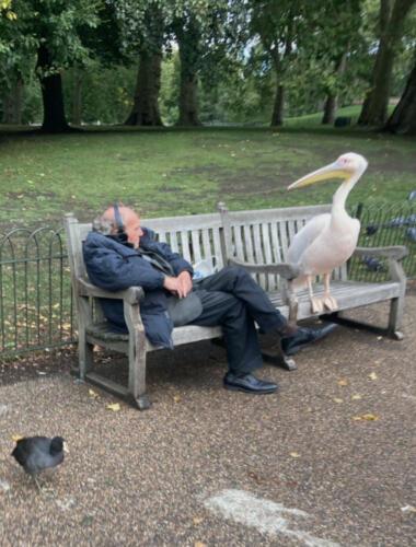 Пеликан подсел к дедушке на скамейку в парке и подарил ему путёвку в мемы про политиков и отношения