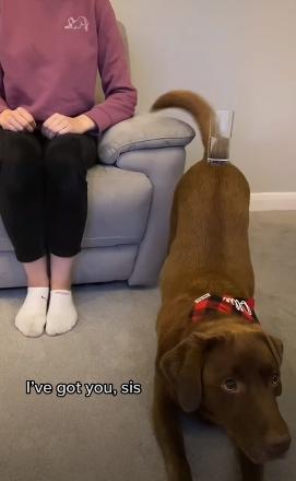 Пёс так ловко удержал стаканы на спине, что стал звездой соцсетей. Готовый столик для хозяйки